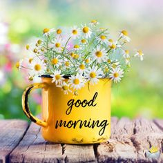 The Best Good Morning Images | Inspire a Better Day