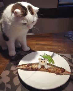 日本人のごはん : 大根おろしアート Japanese meals ごはん…だにょ