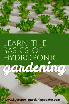 Learn to grow organic healthy food in your own home. No yard required. Learn to grow organic healthy food in your own home. No yard required. Hydroponics System, Hydroponic Gardening, Aquaponics, Greenhouse Farming, Gardening Hacks, Fertilizer For Plants, Organic Fertilizer, Organic Gardening, Garden Fertilizers