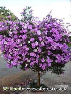 Indoor Flowering Plants, Flowering Shrubs, Beautiful Flowers Garden, Amazing Flowers, Eco Garden, Pink Trees, Colorful Plants, Blossom Trees, Blooming Flowers