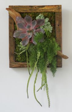 Vertical Garden | Succulent Wreath | Gallery | Succulent Designs | Abbey McKenna Succulent Designs