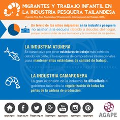 MIGRANTES Y TRABAJO INFANTIL EN LA INDUSTRIA PESQUERA TAILANDESA (2) #HazConciencia #HumanTrafficking #AGAPE #InfografiaAGAPE  https://instagram.com/p/8nfeR1uWn6/