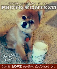 Meet Louie. #Pets love #Nutiva #CoconutOil nutiva.com #Dog