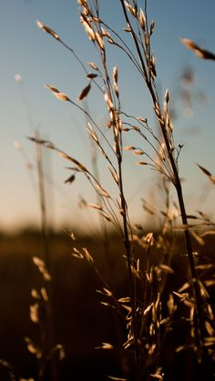 Nature Sunlight Weed #iPhone #7 #wallpaper