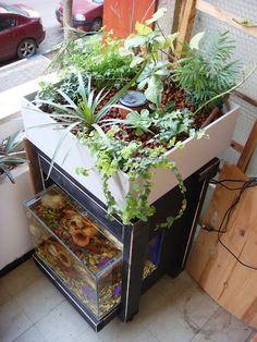 Indoors Aquaponics System #aquaponics https://blog.yibi.org/tag/urban-gardening