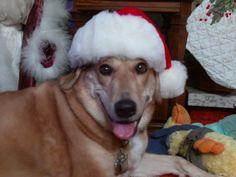 Did you say Santa was coming????