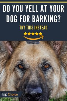 Does your dog bark too much? Try the BarxBuddy anti-barking device instead of yelling at them. With the click of a button you can get them to immediately stop barking and listen. Check out a some of our Featured Bully Breeds we Love! Cute Puppies, Cute Dogs, Dogs And Puppies, Doggies, Cute Baby Animals, Animals And Pets, Funny Animals, Anti Aboiement, Dog Hacks