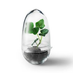 Grow Minidrivhus M, Klar - Caroline Wetterling - Design House Stockholm - RoyalDesign.no
