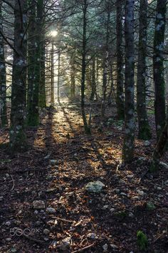 Forest - Parnitha mnt., Attica, Greece.
