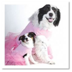 Dog Apparel & Dog Clothing - Cute Dog Clothes - Moondoggie Dog Boutique