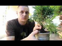 Bonsai Basics part one juniper re potting. - YouTube