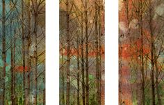 Through the Trees 3 Piece Art Print on Premium Canvas Set