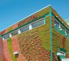 Bright Green Living Wall