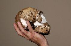 O professor Lee Berger segura a réplica de um crânio do 'Homo Naledi', nova espécie de hominídeo descoberta na África do Sul. (Foto: Siphiwe Sibeko/Reuters)