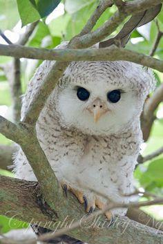 Life's Indulgences: Owls