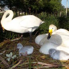 New arrivals at Lake Eola Park in Orlando, Florida!