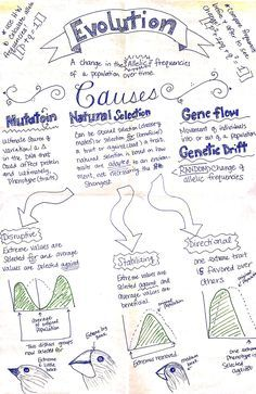Darwin\'s Theory of Evolution Worksheet | Chapter 15 Theory of ...