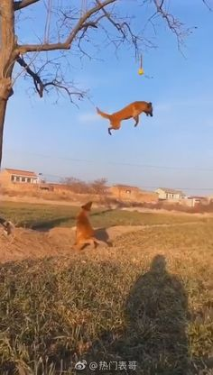 Having fun with friend - Does gravity has no effect on them? Does gravity has no effect on them? Does gravity has no effect - Funny Animal Jokes, Cute Funny Animals, Funny Animal Pictures, Funny Dog Videos, Funny Dogs, Cute Dogs, Funny Horses, Beautiful Dogs, Animals Beautiful