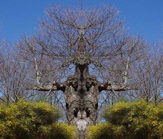 most weird trees pics pictures photos images 29 The 44 Extremely Strange Looking Trees Found On Earth