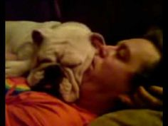 Bulldog, Lessons in Sleeping and Relaxation (Turtorial incl. movies and pictures)