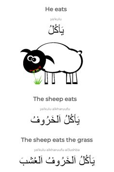 The arabic sentence 'The sheep eats the grass. We show you information about each of the words, including declensions and/or conjugations, part of speech and a link to learn more about the particular word. Arabic Verbs, Arabic Sentences, Arabic Phrases, English Phrases, Learn English Words, Arabic Conversation, Spoken Arabic, Learn Arabic Online, Arabic Alphabet For Kids