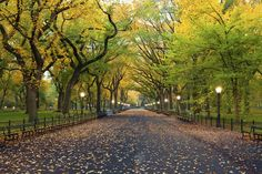 Central Park in NYC, United States | 13 Enchanting Tree Tunnels You Need To Walk Through