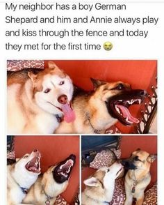 """42 Hilarious Animal Memes That Are So Cute You're Gonna Die - Funny memes that """"GET IT"""" and want you to too. Get the latest funniest memes and keep up what is going on in the meme-o-sphere. Animal Jokes, Funny Animal Memes, Dog Memes, Funny Animal Pictures, Cute Funny Animals, Cute Baby Animals, Funny Cute, Funny Dogs, Animals And Pets"""