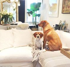 Meghan Markle's Toronto home shows her love for white furnishings and luxury accents such as a grey Turkish cotton throw on the sofa and a fluffy sheepskin cushions propped up on her dining chairs in the background