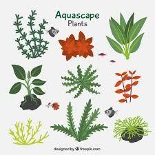 Resultado De Imagen Para Dibujos De Plantas Acuaticas Plantas Acuaticas Plantas Parque Infantil Al Aire Libre