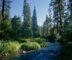 Summer along the East Fork of the Black River in the White Mountains of Arizona