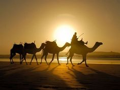 The Sahara Explorer Trek