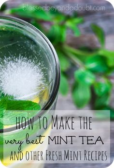Growing fresh mint doesn't require a green thumb. Learn how to make the best mint tea and check out other fresh mint recipes! - Gardening For Life Mint Recipes, Herb Recipes, Cooking Recipes, Healthy Recipes, Green Day, Mint Garden, Herb Garden, Vegetable Garden, Fresh Mint Tea