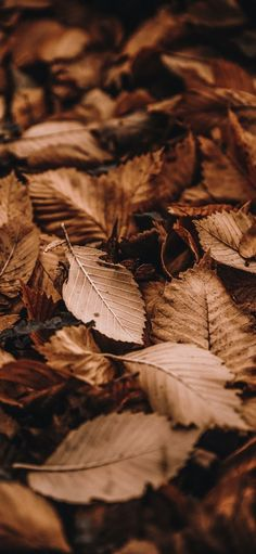 Pin by ane sssss on Обои фоны in 2021 | Leaves wallpaper iphone, Backgrounds phone wallpapers, Cool wallpapers for phones