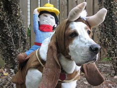 57 Basset Hounds In Costumes