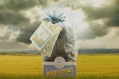 Soap nuts Giving Tree.cleaning our clothes and feeding our hungry. Best Laundry Detergent, Soap Nuts, Berries, Cleaning, World, Clothes, Outfits, Clothing, Kleding