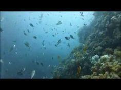 熱海 ダイビングツアー | 1.ソーダイ根 2.沈船