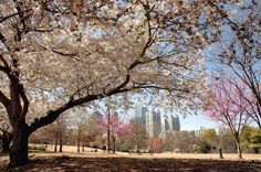 Another beautiful Spring weekend in Atlanta, GA! If you are in town this weekend and choose to get outside and enjoy this beautiful weather, there are a few things to check out below. Have a great …