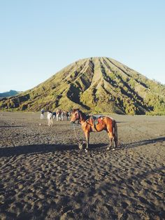 Bromo Tengger Semeru National Park, well known for its sunrise and the Tengger tribe. Look for the folk story of Tengger, it's indeed interesting. East Indies, Mount Rainier, Sunrise, National Parks, Mountains, Landscape, Places, Travel, Folk
