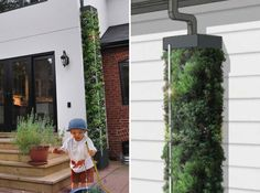 cista rainwater harvesting, sustainable design, green design, water conservation, green gardening, moss sund, figforty