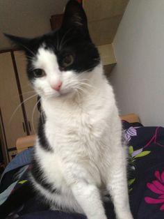 Kitty Katze | Pawshake