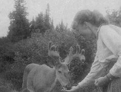 Sylvia Plath feeding deer
