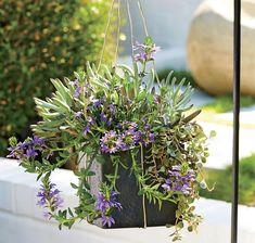 best 25 large flower pots ideas on pinterest potted plants for patio large outdoor planters. Black Bedroom Furniture Sets. Home Design Ideas