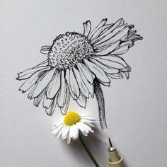 Related posts: 44 Ideas flowers drawing tattoo sketches inspiration for 2019 new Ideas flowers drawing design plants Super tattoo flower drawing sketches 38 ideas 62 Trendy Ideas For Drawing Sketches Disney Doodles Tattoos Flower Drawing Tumblr, Flower Sketches, Drawing Flowers, Daisy Drawing, Flower Drawings, Tattoo Flowers, Art Flowers, Black Pen Drawing, Simple Flower Drawing