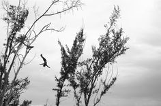 Martin Brent - Tree Divers VI - taken in Negril South West Jamaica Damien Hirst, Online Gallery, Black And White Photography, Jamaica, Contemporary Art, Negril, Artwork, Artist, Nature