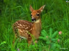 deers | Deers 1024x768 Wallpaper # 3