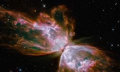 This image of object NGC 6302, known as the Butterfly Nebula, was taken recently by the Hubble space telescope. Photograph: AP