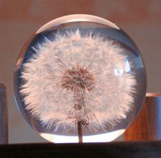 Dandelion paperweight: In case of emergency, break glass, wish, blow. ---so pretty!!
