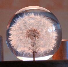 Dandelion paperweight: In case of emergency, break glass, wish, blow. ---so pretty!!