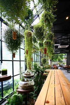 Hanging plants give the greenhouse charm. - All For Herbs And Plants Coffee Shop Design, Cafe Design, House Design, Garden Coffee, Restaurant Design, Restaurant Restaurant, Greenhouse Restaurant, Veranda Restaurant, Restaurant Interiors