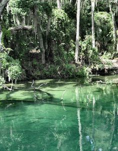 I always used to love the springs in Central Florida - wish I was there at Blue Spring now!